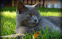 Cirkáló cica