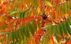 Őszi színek.
