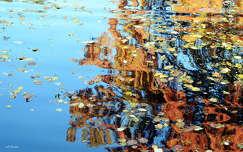 Tükröződés, tó, falevél, arborétum