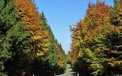 út erdő ősz