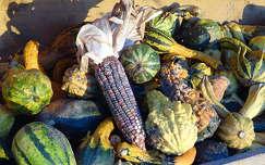 termény tök kukorica ősz