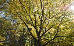 Ősz, fa, fény