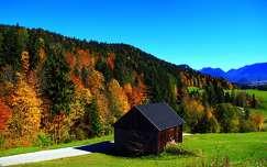 erdő ősz faház