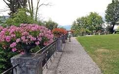 út muskátli virágcsokor és dekoráció