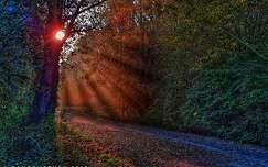 Ébred az erdő...