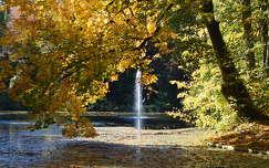 fa vízesés ősz