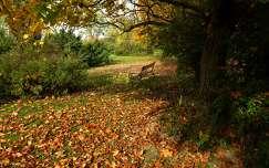levél ősz pad