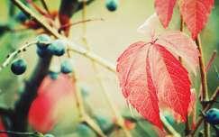 levél ősz színes