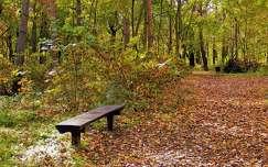 pad erdő út ősz