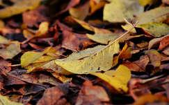 levél ősz sárga barna színes