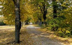 ősz, fák, magyarország