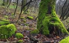 avar, moha, ősz, magyarország