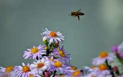 méh virág