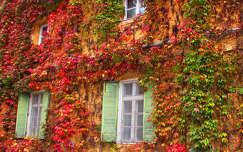ablak, ősz