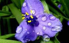 virág, vízcsepp, magyarország