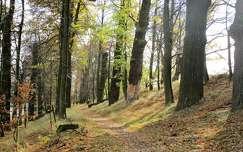 erdei út ősszel