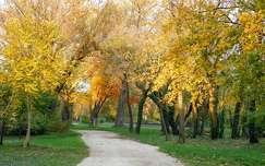 ősz, út, Balatonalmádi, magyarország