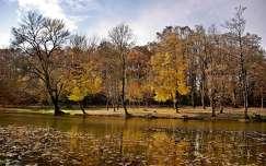 folyó fa ősz