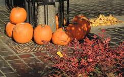 tök ősz