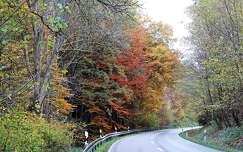 út ősz