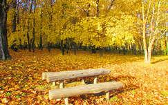 Sárga erdő
