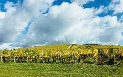 felhő szőlőültetvény ősz
