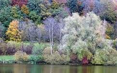erdő ősz
