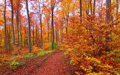 Bakony, ősz vége.