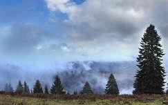 kárpátok felhő románia fenyő erdély