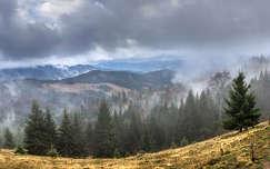 erdély kárpátok örökzöld felhő hegy románia fenyő