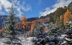 erdő tél ősz