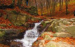 Gaja-patak, ősz, Bakony