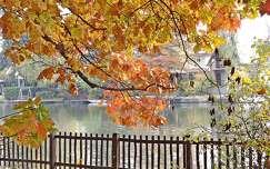 ősz kerítés