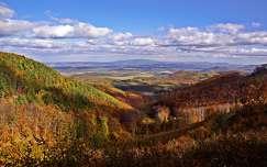 ősz hegy erdő
