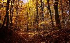 ősz út erdő