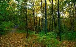 ősz fény út