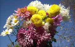 margaréta virágcsokor és dekoráció krizantém