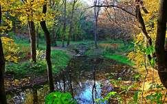 ősz erdő patak