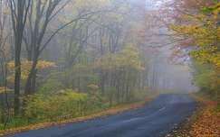 ősz köd út erdő