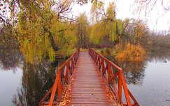 híd ősz tükröződés út