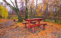 ősz pad