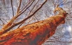 Égig érő fa...
