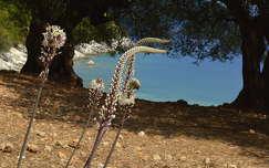 Horgota Kefalonia
