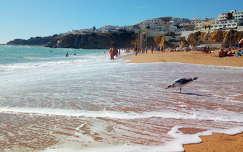 Albufeira, Algarve, Portugália, sirály