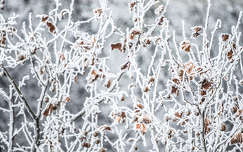 Tél, fagy, faágak