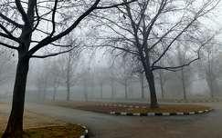 tél, fák, köd, magyarország