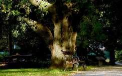 pad, ősz, fa, Balatonalmádi, magyarország
