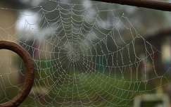vízcsepp pókháló