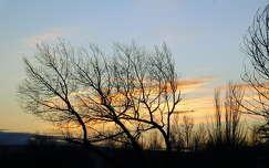 naplemente, fák, magyarország
