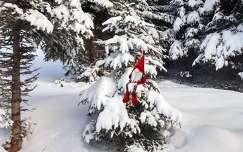 örökzöld karácsonyi dekoráció tél fenyő